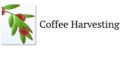 coffee harvesting
